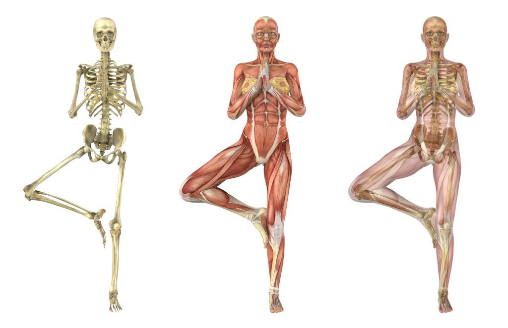 La importancia de estudiar y entender anatomía en la práctica de ...